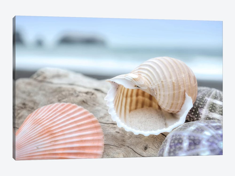 Crescent Beach Shells IX by Alan Blaustein 1-piece Canvas Artwork