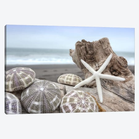 Crescent Beach Shells V Canvas Print #BLA23} by Alan Blaustein Canvas Art
