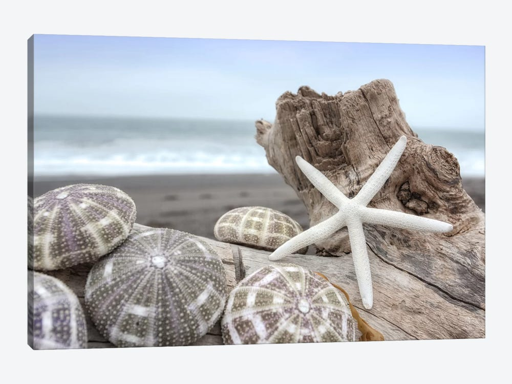 Crescent Beach Shells V by Alan Blaustein 1-piece Canvas Art Print