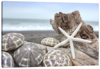 Crescent Beach Shells V Canvas Art Print