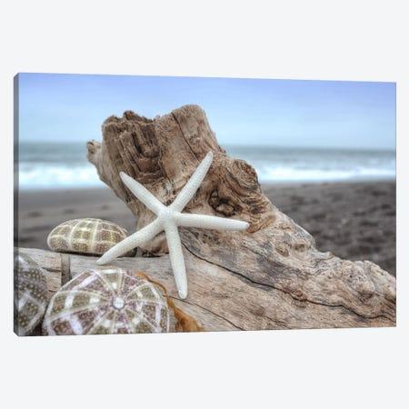 Crescent Beach Shells VI Canvas Print #BLA24} by Alan Blaustein Canvas Art Print