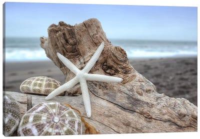 Crescent Beach Shells VI Canvas Art Print