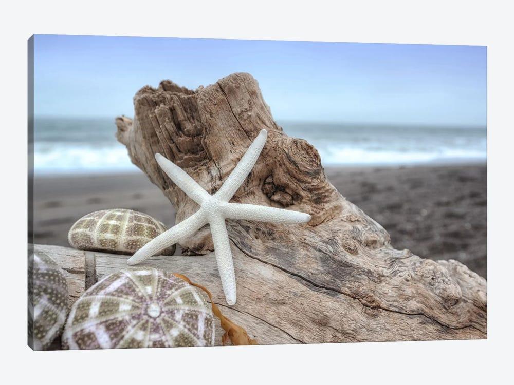 Crescent Beach Shells VI by Alan Blaustein 1-piece Canvas Wall Art