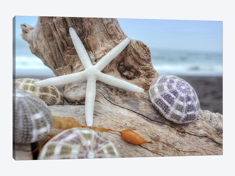 Crescent Beach Shells VII by Alan Blaustein 1-piece Canvas Art Print