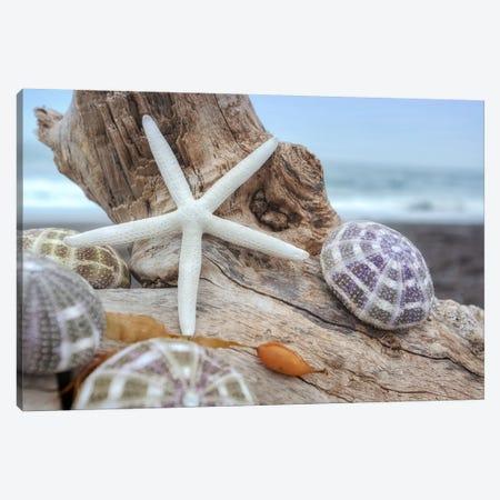 Crescent Beach Shells VII Canvas Print #BLA25} by Alan Blaustein Canvas Art Print
