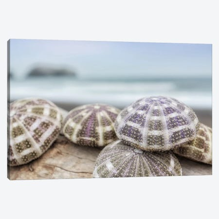Crescent Beach Shells VIII Canvas Print #BLA26} by Alan Blaustein Canvas Print