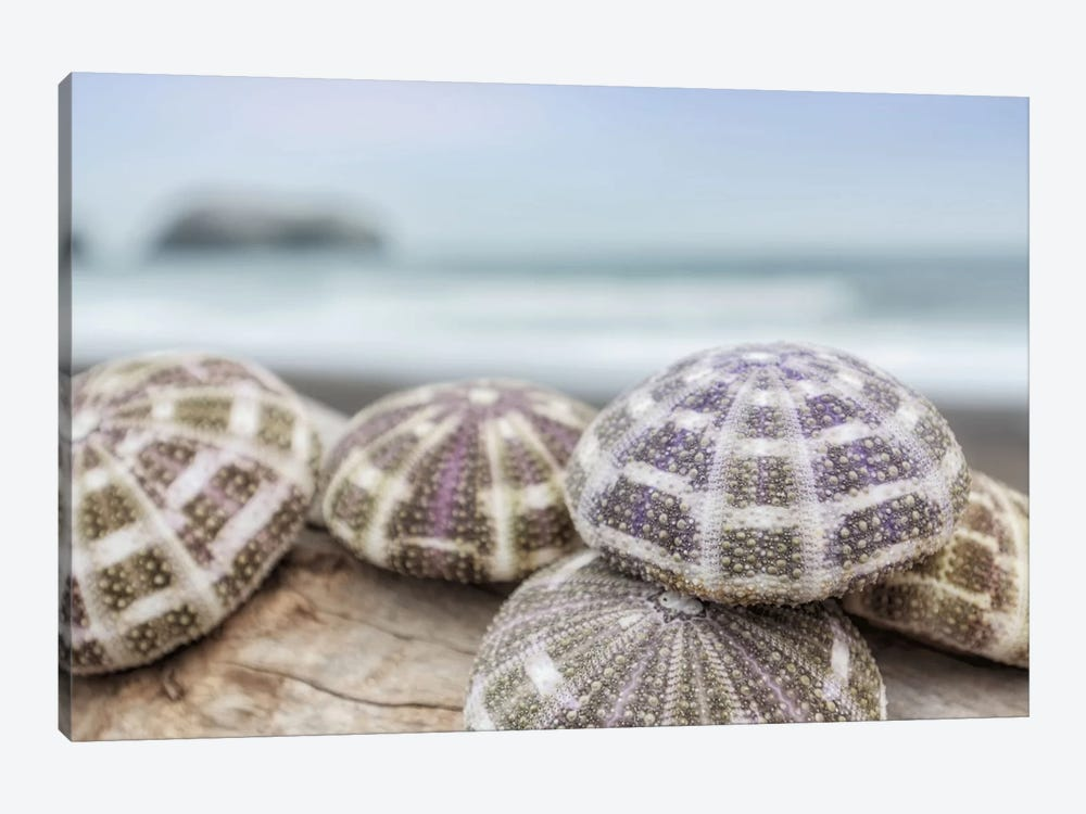 Crescent Beach Shells VIII by Alan Blaustein 1-piece Canvas Artwork