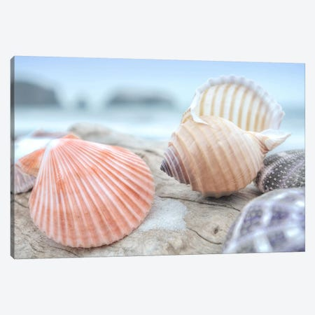 Crescent Beach Shells X Canvas Print #BLA27} by Alan Blaustein Canvas Print