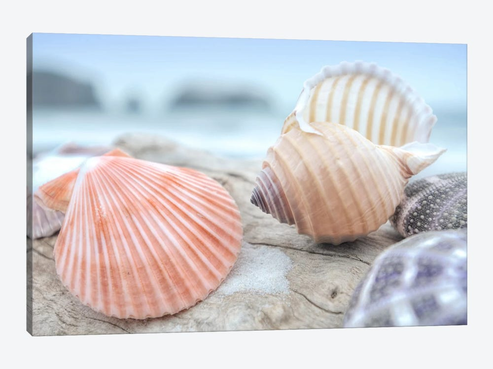 Crescent Beach Shells X 1-piece Canvas Art Print