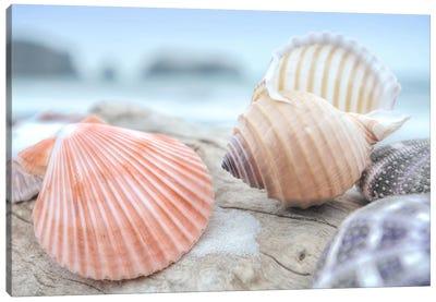 Crescent Beach Shells X Canvas Art Print