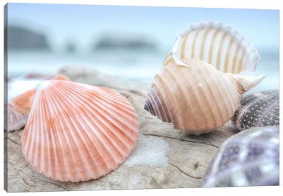 Crescent Beach Shells X Canvas Art Print