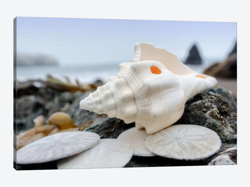 Crescent Beach Shells XI by Alan Blaustein 1-piece Canvas Artwork
