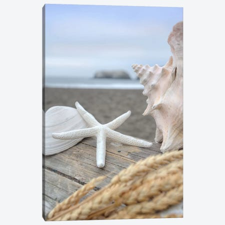 Crescent Beach Shells XII Canvas Print #BLA29} by Alan Blaustein Canvas Artwork