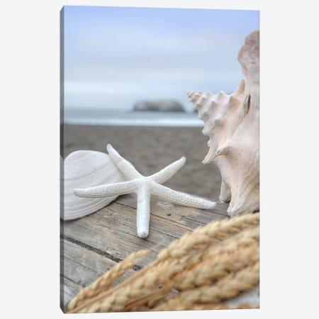 Crescent Beach Shells XII Canvas Print #BLA29} by Alan Blaustein Canvas Artwork