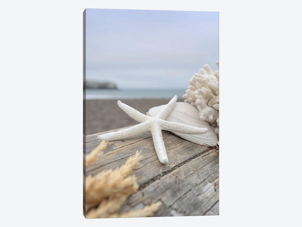 Crescent Beach Shells XIII by Alan Blaustein 1-piece Art Print