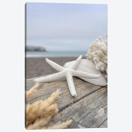 Crescent Beach Shells XIII Canvas Print #BLA30} by Alan Blaustein Canvas Print