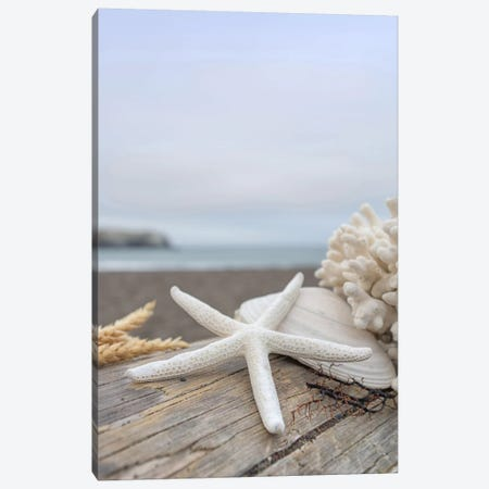 Crescent Beach Shells XIV Canvas Print #BLA31} by Alan Blaustein Canvas Print
