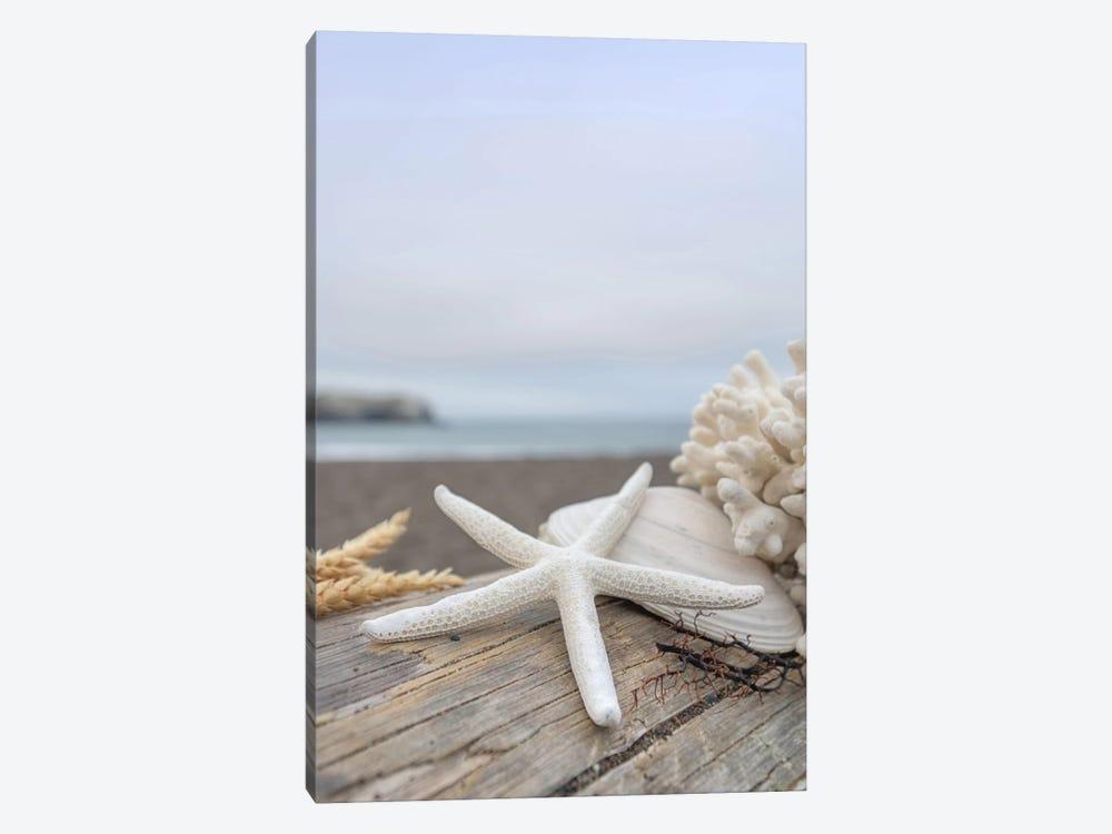 Crescent Beach Shells XIV by Alan Blaustein 1-piece Canvas Wall Art