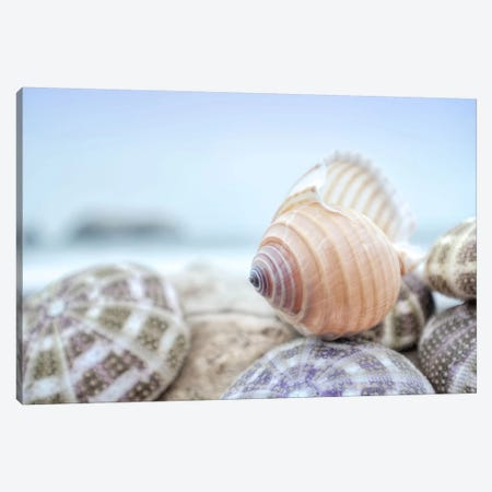 Crescent Beach Shells XV Canvas Print #BLA32} by Alan Blaustein Canvas Print