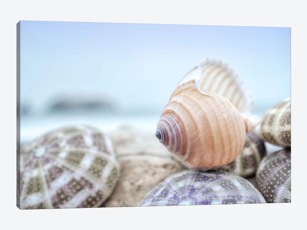 Crescent Beach Shells XV by Alan Blaustein 1-piece Canvas Art Print