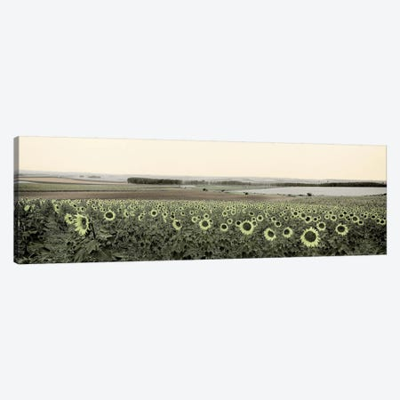 Andalusian Sun Flowers Canvas Print #BLA59} by Alan Blaustein Canvas Art Print