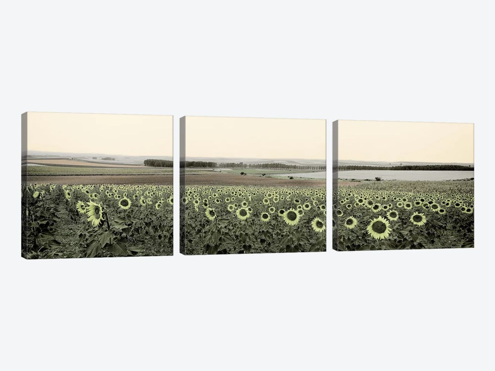 Andalusian Sun Flowers by Alan Blaustein 3-piece Canvas Artwork