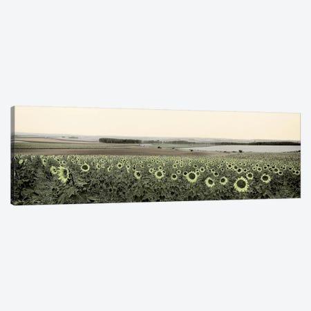 Andalusian Sun Flowers Canvas Print #BLA59} by Alan Blaustein Canvas Art Print