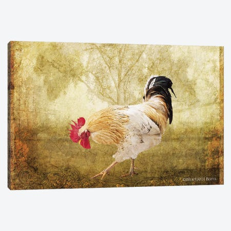 Vintage Scratching Rooster 3-Piece Canvas #BLB102} by Bluebird Barn Canvas Art Print
