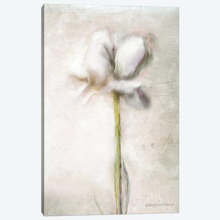 Blush Ranunculus Solitary Canvas Print #BLB11} by Bluebird Barn Canvas Wall Art