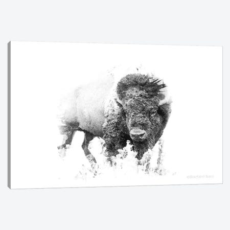 Bold Minimalist Bison Canvas Print #BLB12} by Bluebird Barn Canvas Artwork