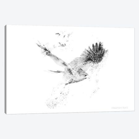 Wingspread Minimalist Hawk Canvas Print #BLB135} by Bluebird Barn Canvas Print