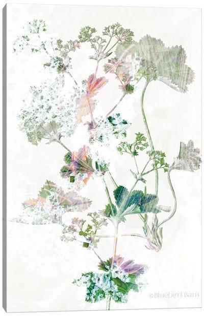 Boho Geranium Botanical    Canvas Art Print