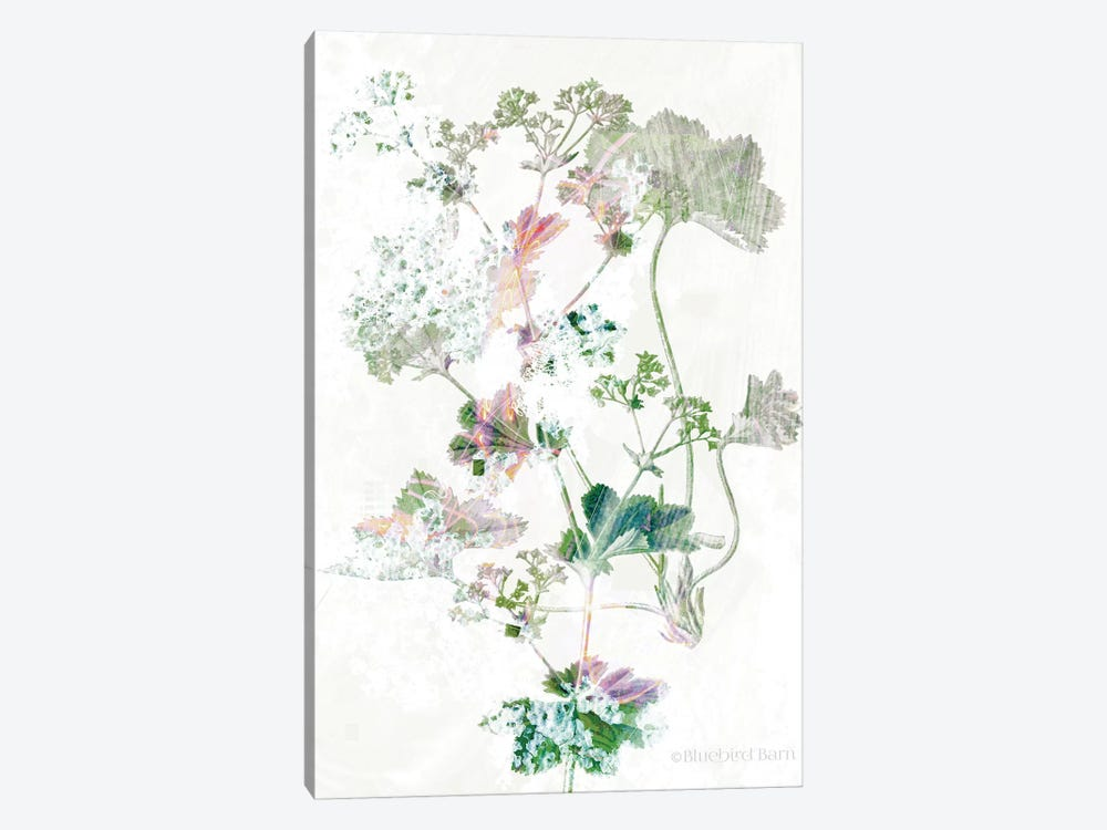 Boho Geranium Botanical    by Bluebird Barn 1-piece Canvas Wall Art