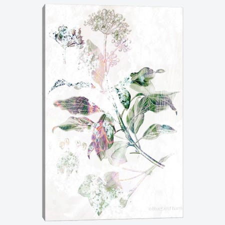 Boho Verbena Botanical    Canvas Print #BLB174} by Bluebird Barn Canvas Print