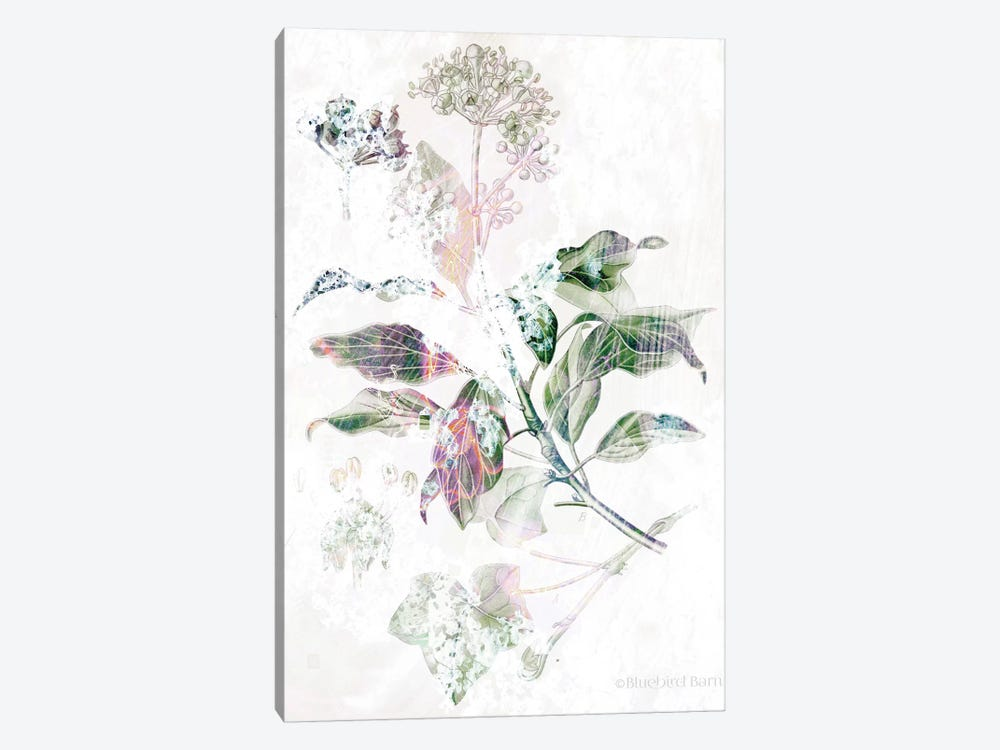 Boho Verbena Botanical    by Bluebird Barn 1-piece Canvas Print