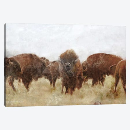 Buffalo Canvas Print #BLB176} by Bluebird Barn Art Print