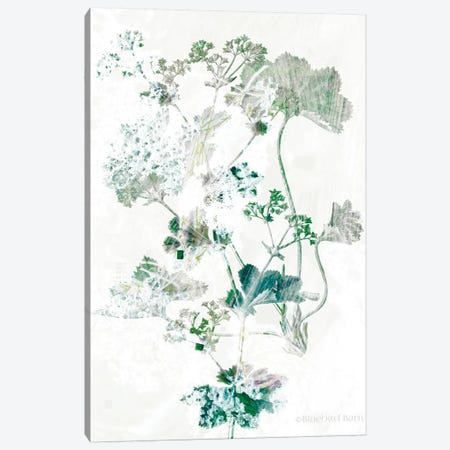 Geranium Botanical  Canvas Print #BLB179} by Bluebird Barn Canvas Artwork