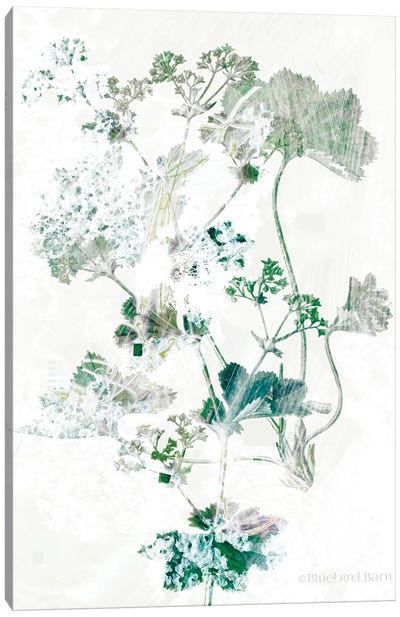 Geranium Botanical  Canvas Art Print