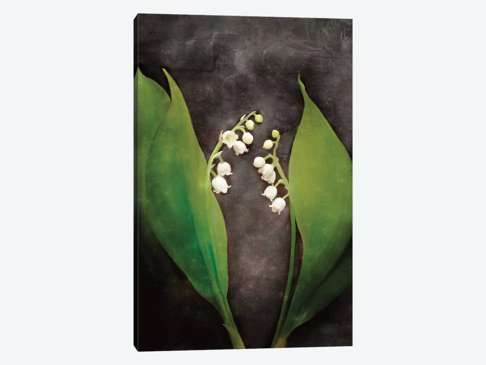 Contemporary Floral Lily of the Valley by Bluebird Barn 1-piece Canvas Print