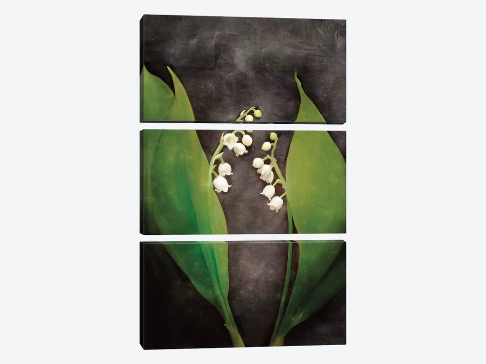 Contemporary Floral Lily of the Valley by Bluebird Barn 3-piece Canvas Art Print