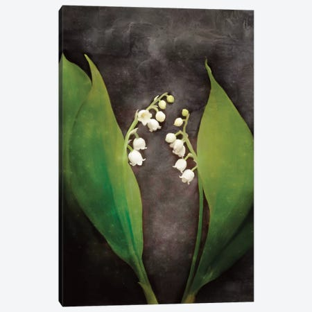 Contemporary Floral Lily of the Valley Canvas Print #BLB21} by Bluebird Barn Canvas Art Print