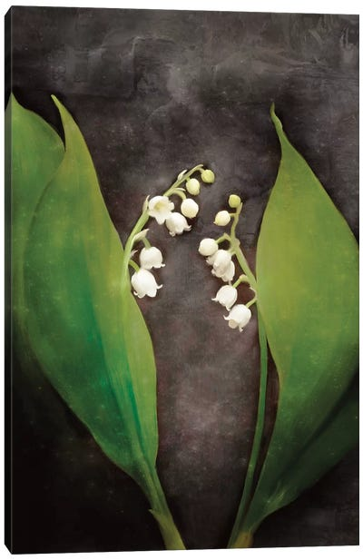 Contemporary Floral Lily of the Valley Canvas Art Print