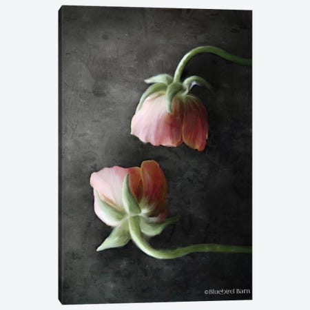 Contemporary Floral Pink Ranunculus 3-Piece Canvas #BLB22} by Bluebird Barn Art Print