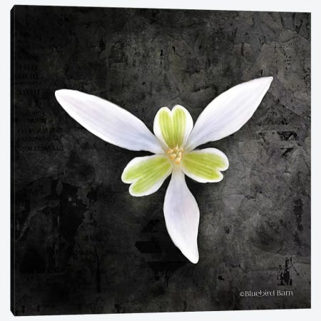 Contemporary Floral Trillium Canvas Print #BLB23} by Bluebird Barn Canvas Art Print