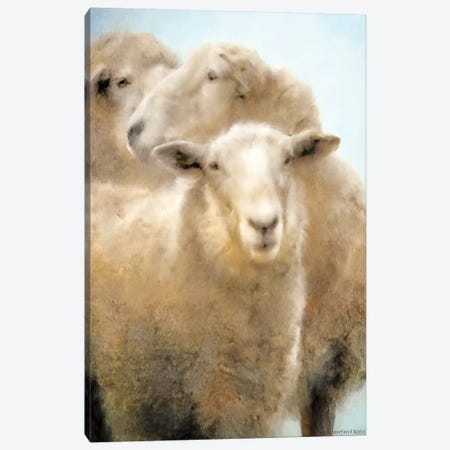 Three Sheep Portrait Canvas Print #BLB242} by Bluebird Barn Canvas Artwork