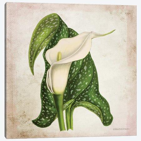 Vintage Calla Lily Canvas Print #BLB244} by Bluebird Barn Canvas Art Print