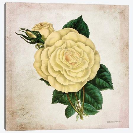 Vintage Cream Rose Canvas Print #BLB245} by Bluebird Barn Canvas Print