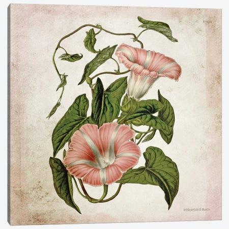 Vintage Trumpet Vine Canvas Print #BLB248} by Bluebird Barn Canvas Art