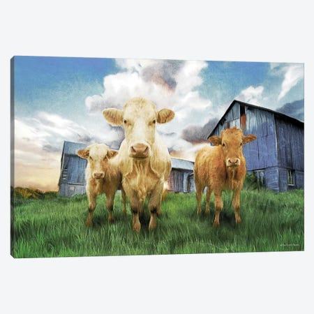 Three Curious Calves Canvas Print #BLB255} by Bluebird Barn Canvas Art