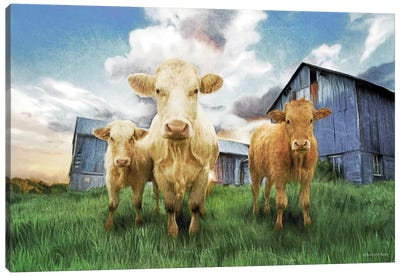 Three Curious Calves Canvas Art Print